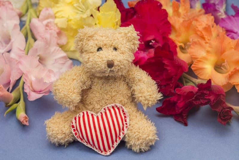 Download 概念礼品查出在白色 逗人喜爱的玩具和五颜六色的剑兰 库存照片. 图片 包括有 工作室, budd, 恭维 - 59102288