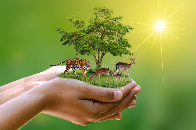 概念自然保护保存保护狂放和w的野生生物储备老虎鹿全球性变暖食物大面包生态人的手 免版税库存图片