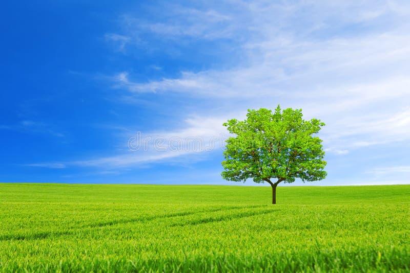 概念许多生态的图象我的投资组合 新的生活 树、领域和美丽的天空 免版税库存照片