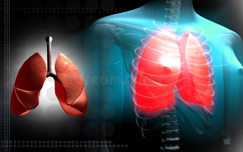 概要女性人力的肺 向量例证