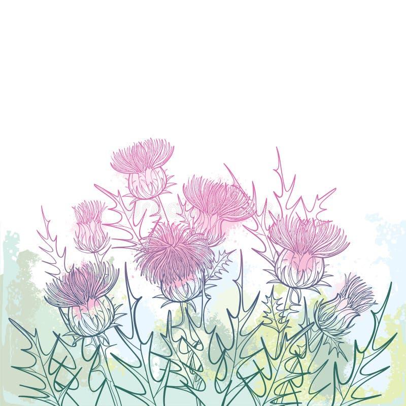 概述传染媒介丛林welted蓟或Carduus植物,多刺的叶子、芽和花束在粉红彩笔和绿色 向量例证