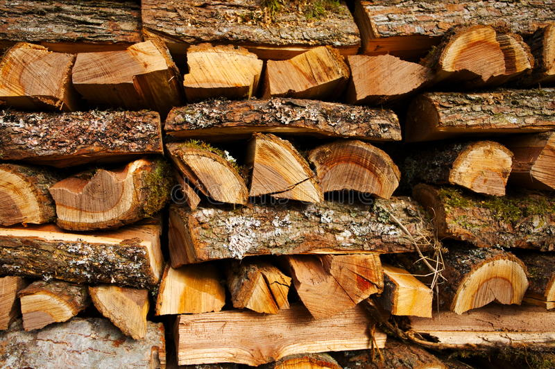 榆木木柴 库存图片