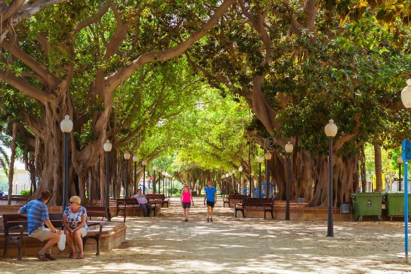 榕属胡同阿利坎特,巨大的树巨人,巴伦西亚,西班牙 免版税库存照片