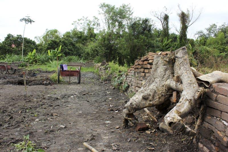 榕树根在考古学站点的 免版税图库摄影