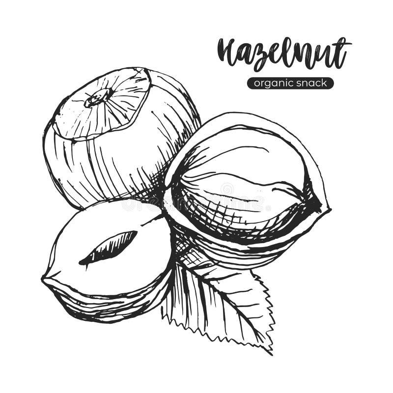 榛子在白色背景隔绝的传染媒介剪影 在葡萄酒样式的手工制造榛子 库存例证