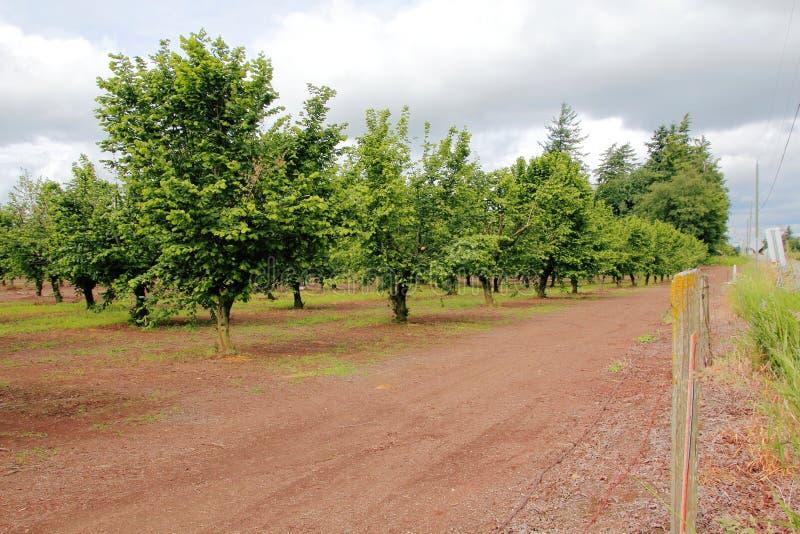 榛子果树园 免版税图库摄影