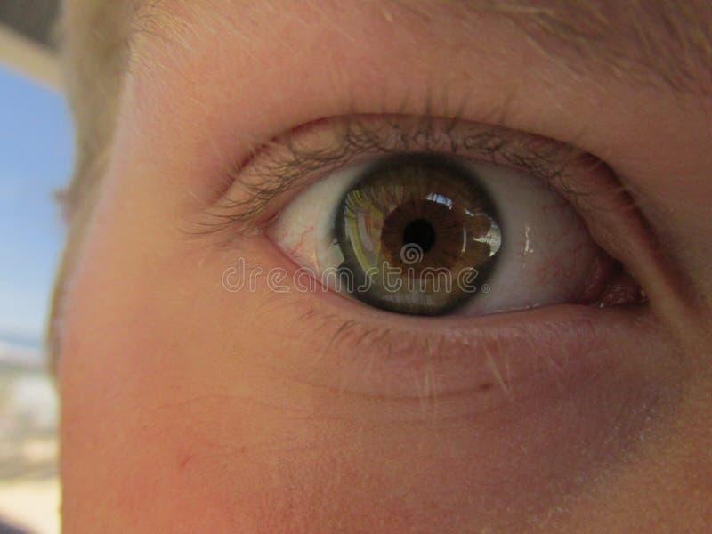 榛树色的眼睛 库存图片