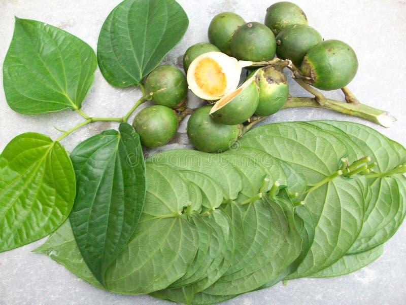 槟榔和叶子 免版税库存照片