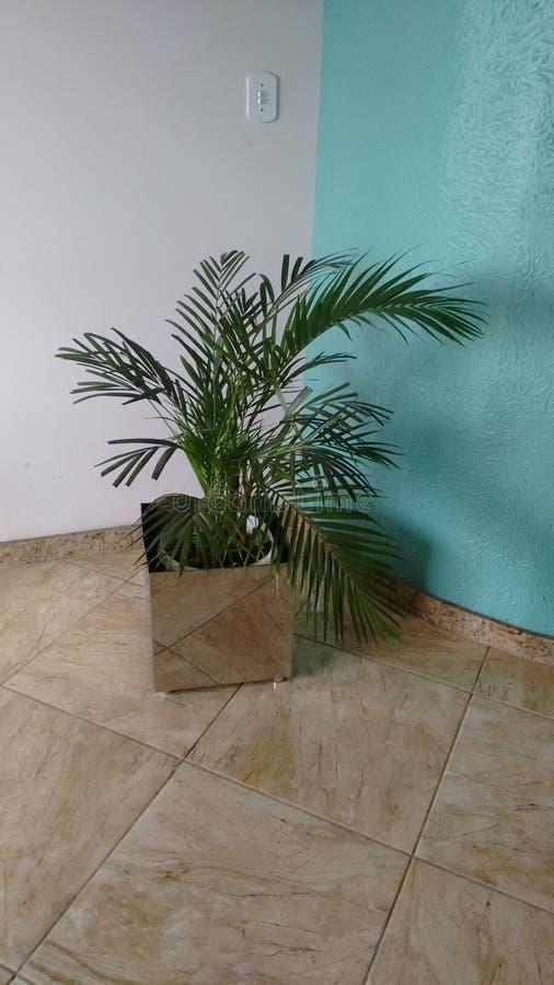 槟榔树棕榈 库存图片