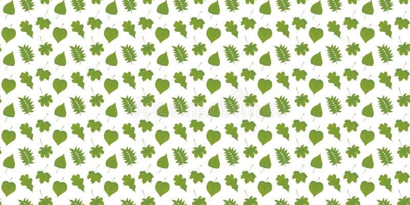 槭树、花揪、菩提树、栗子、橡木和桦树绿色叶子的无缝的样式在白色背景 皇族释放例证
