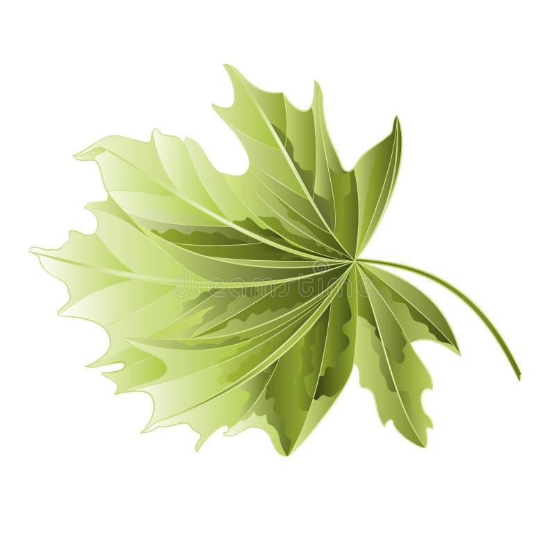 槭树叶子传染媒介 皇族释放例证
