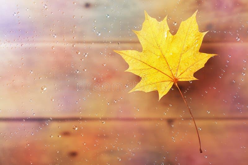 槭树在窗口的秋天叶子用水在雨以后滴下 库存图片