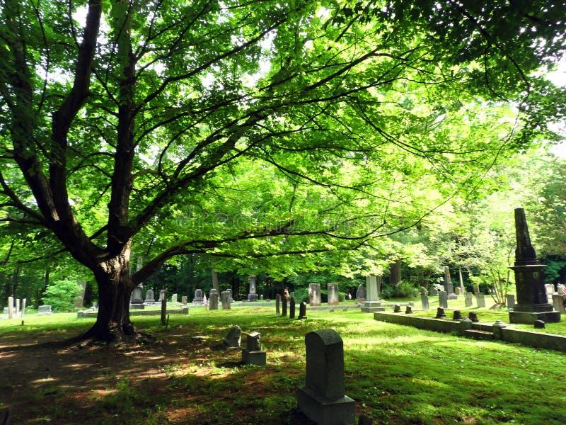 槭树增加树荫到老殖民地公墓 库存照片