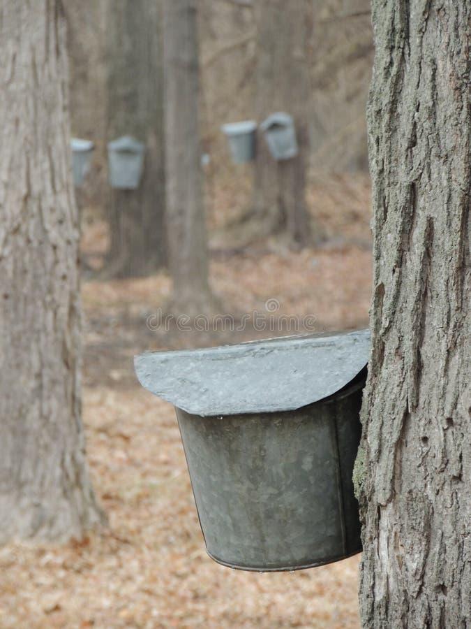 槭树季节 免版税库存图片
