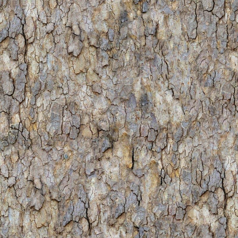 槭树吠声。 无缝的纹理。 库存照片