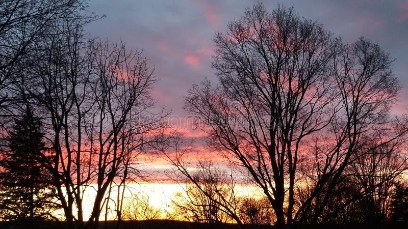 槭树日落#2 图库摄影