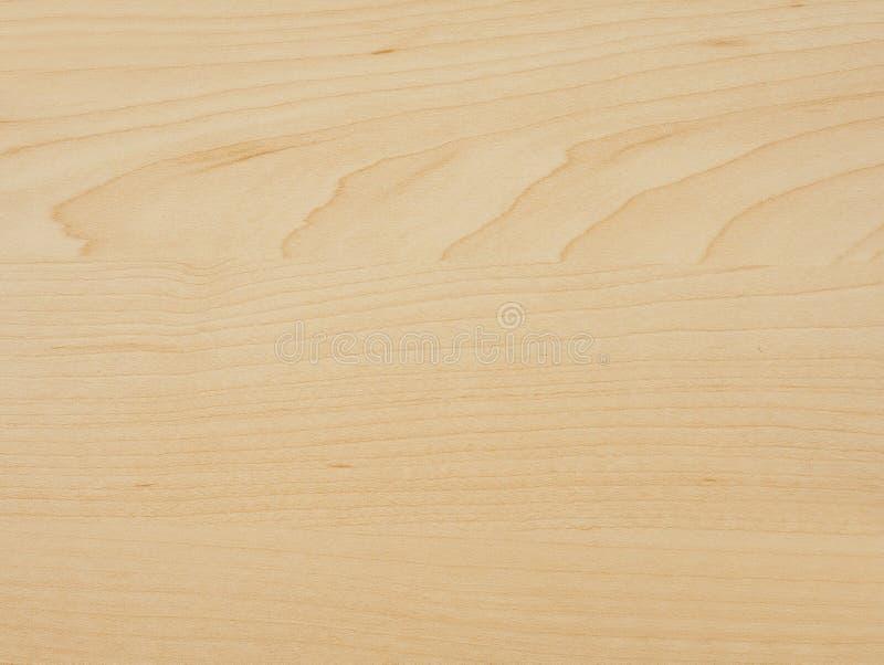 槭树木头 库存图片