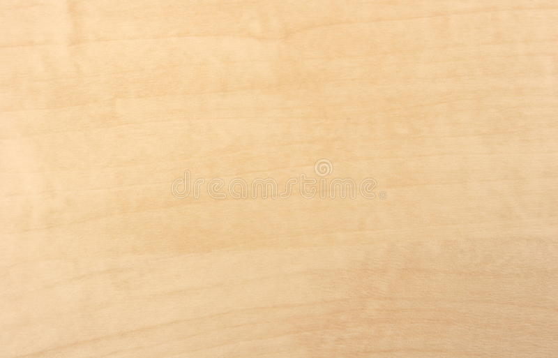 槭树木纹纹理 库存照片