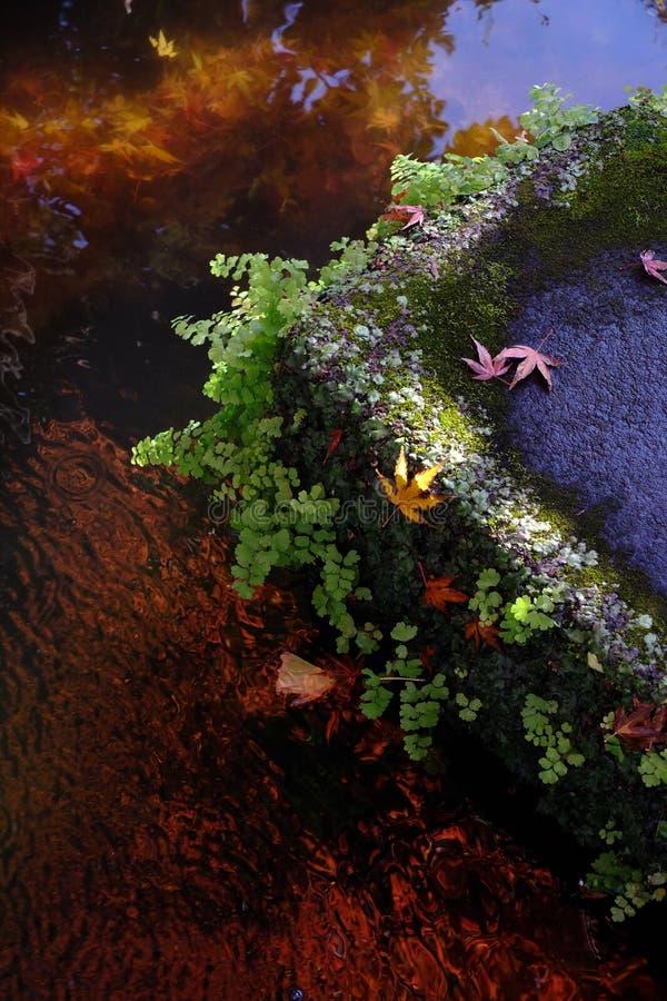 槭树的红色叶子在秋天 图库摄影