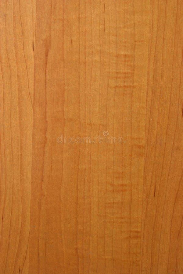 槭树纹理木头 免版税图库摄影