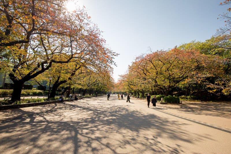 槭树黄色叶子在秋天在上野公园 免版税库存图片