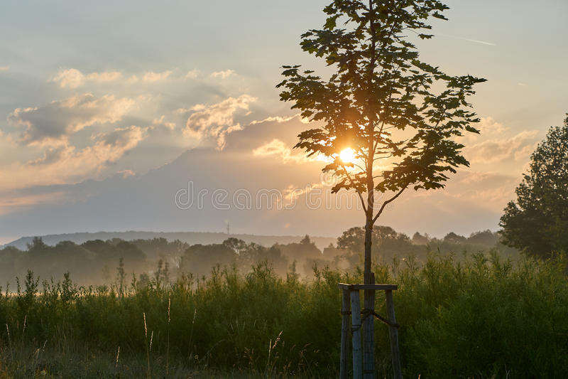 年轻槭树,当在有雾的自然时的日出 与剧烈的云彩的生动的颜色 Wilhelminenaue,拜罗伊特,德国 图库摄影