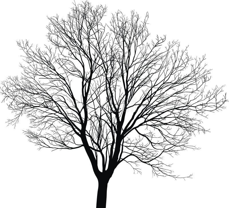 槭树年轻人树 向量例证
