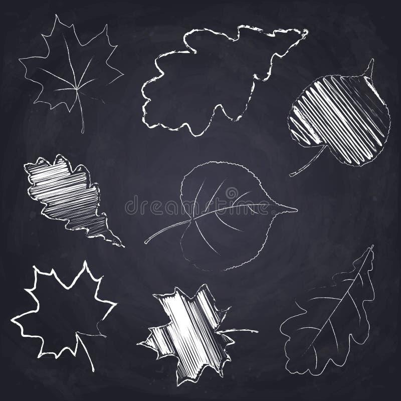 槭树 橡木 白杨树 白垩在黑板背景的被画的树叶子 向量例证