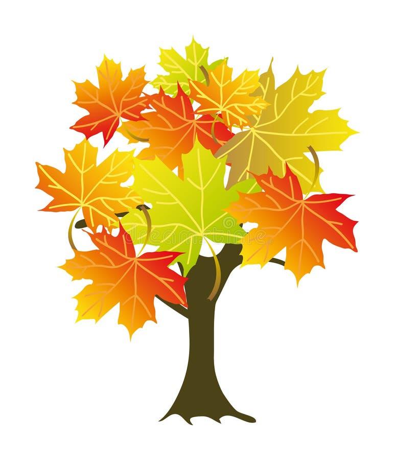 槭树 向量例证