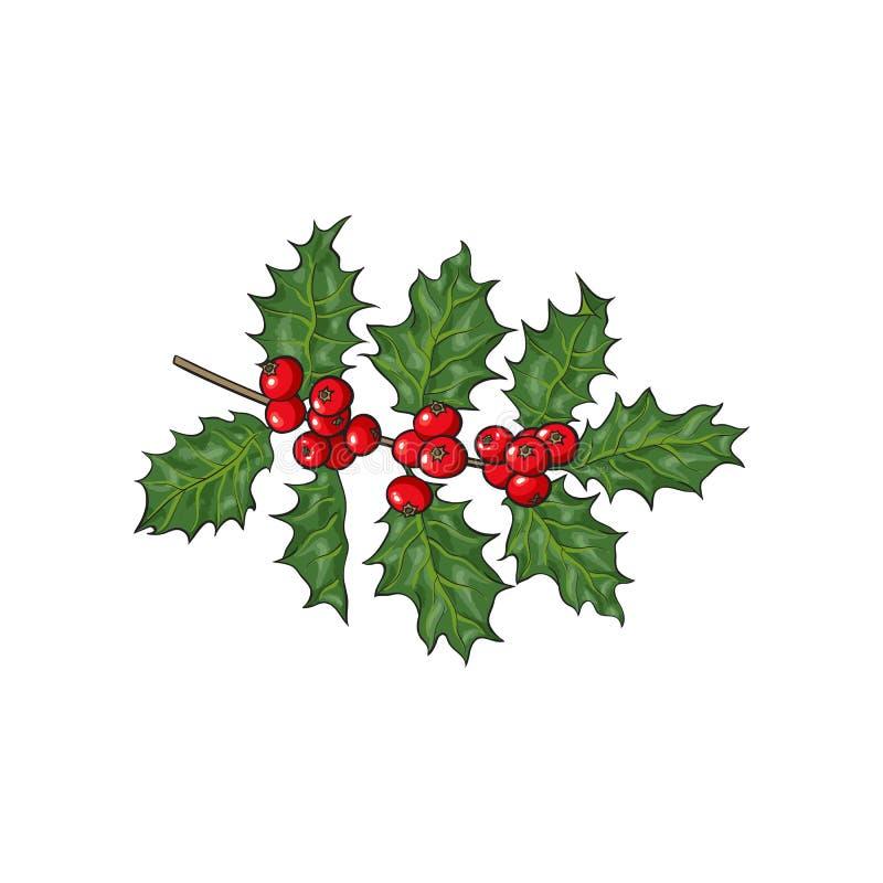 槲寄生分支、枝杈有叶子的和莓果 向量例证
