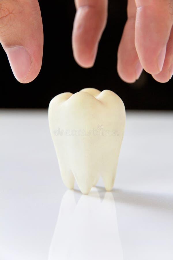 槽牙,牙齿概念 免版税图库摄影