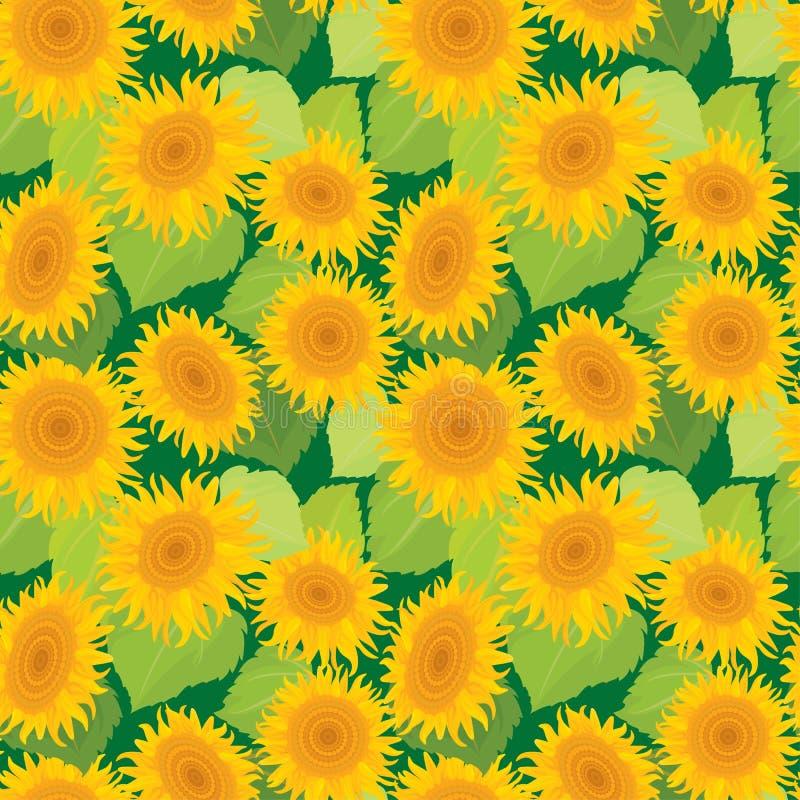 模式无缝的向日葵 夏季,自然backgrou 向量例证