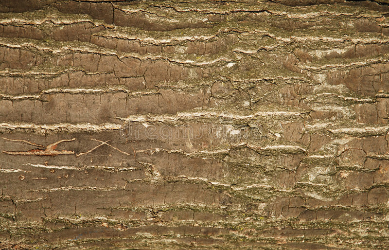模式树干 免版税库存照片