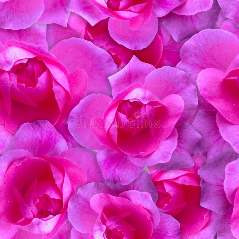 模式粉红色上升了 无缝美好的花的背景 库存照片