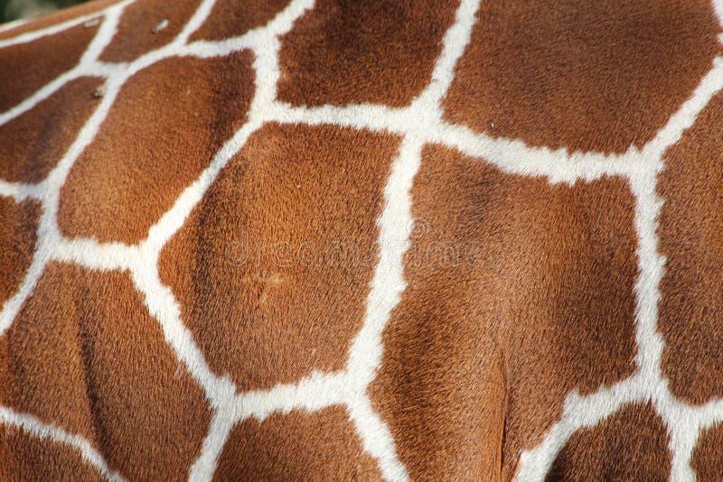 模式 长颈鹿皮肤 库存照片