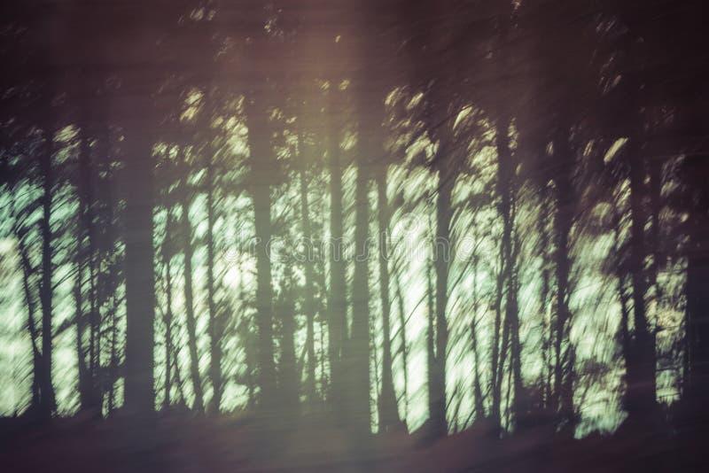 模糊的树的背景图象 库存照片