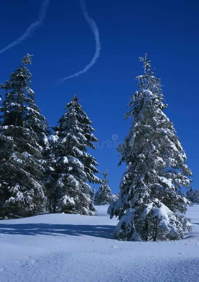 横向云杉的冬天 免版税图库摄影