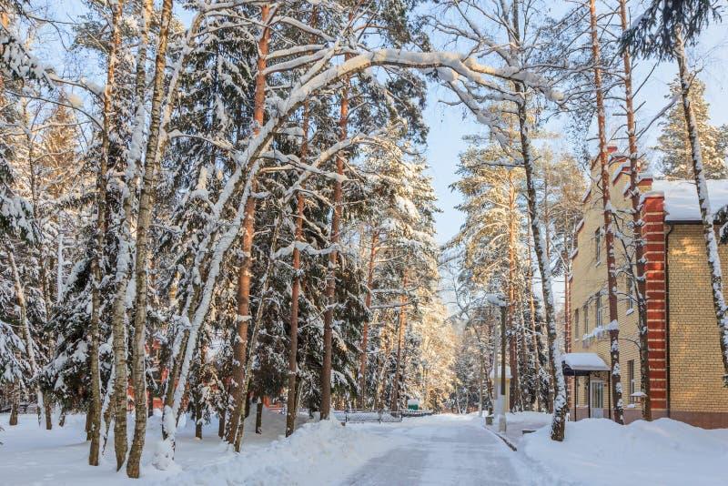 横向俄国村庄冬天 hakasia 11月sberia雪结构树 库存图片