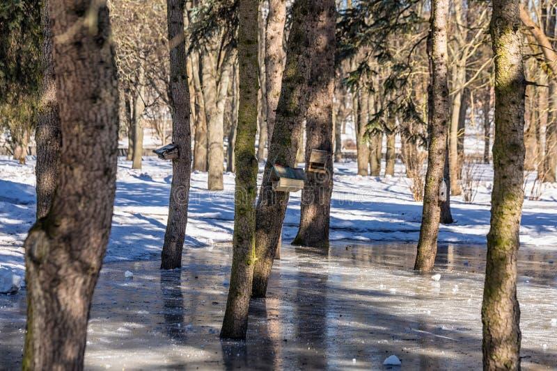 横向全景冬天 免版税图库摄影