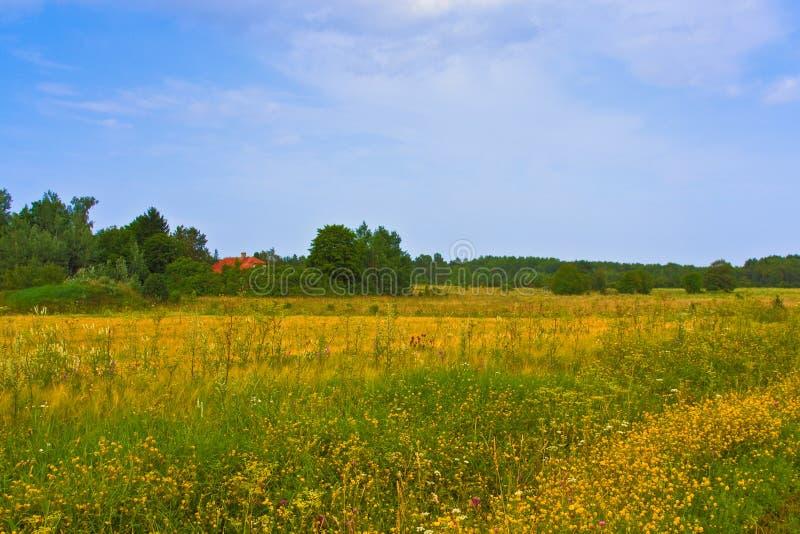 横向农村夏天 典型的欧洲牧人草甸,牧场地,领域 农业的例证 图库摄影