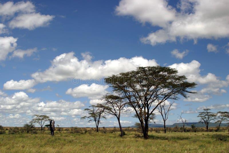 横向坦桑尼亚 库存照片