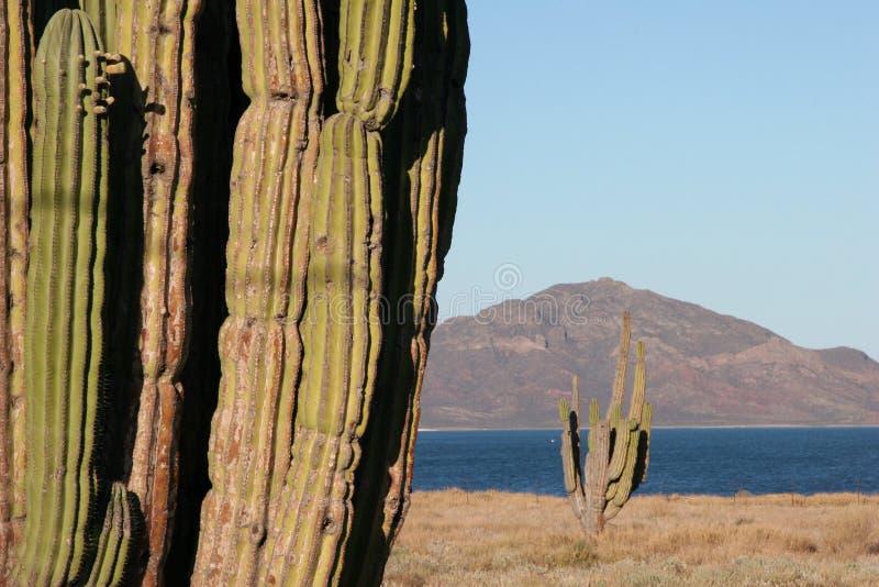 横向墨西哥海洋 免版税库存照片