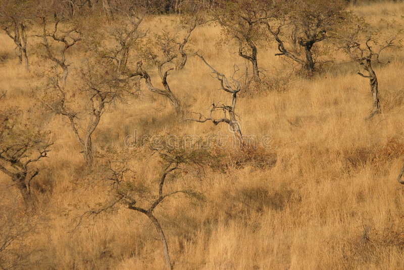 横向大草原森林地 免版税库存照片