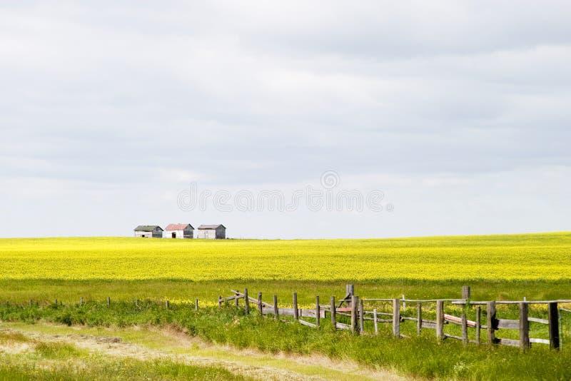 横向大草原 免版税库存照片
