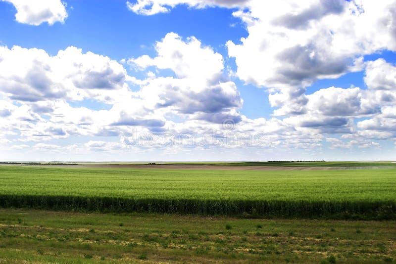 横向大草原 库存图片