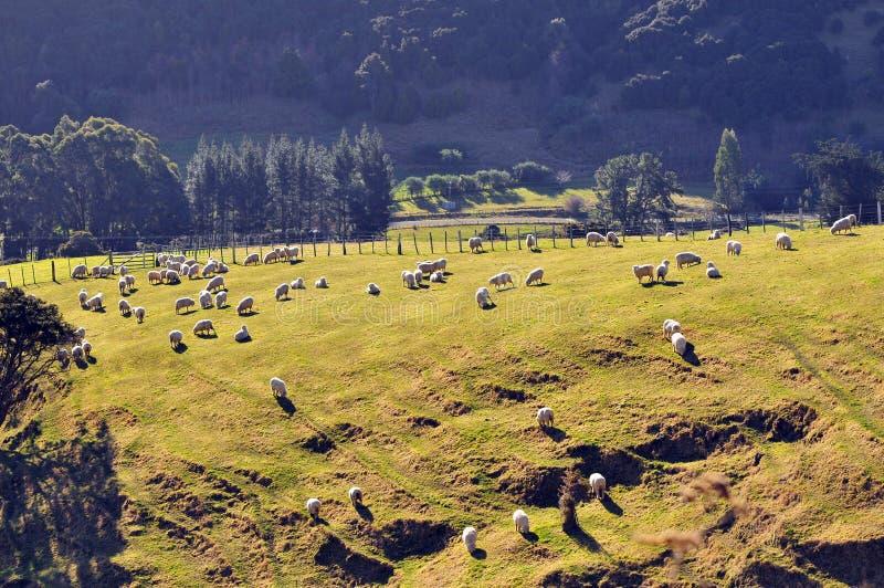 横向新西兰 免版税库存图片