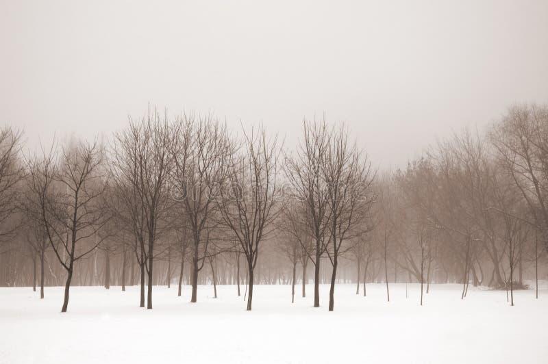 横向有薄雾的冬天 库存照片