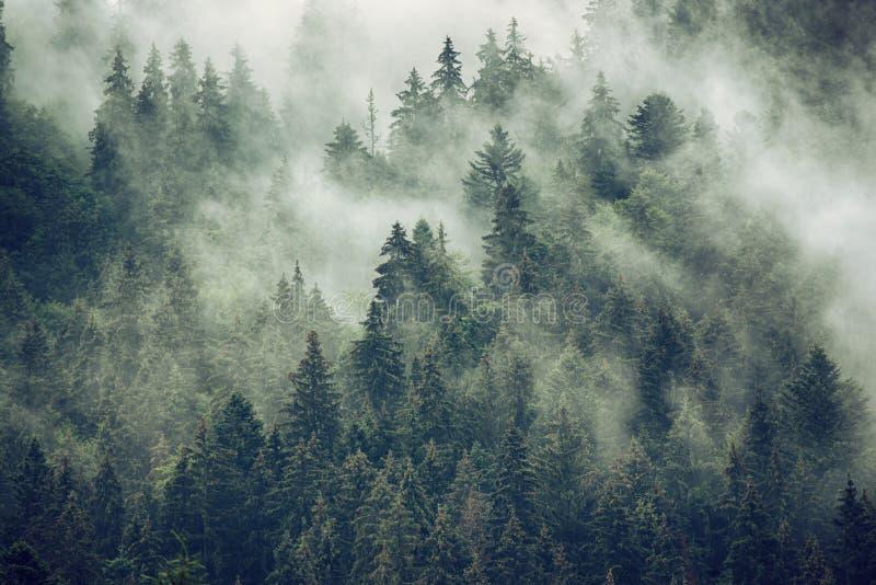 横向有薄雾的山 免版税库存图片