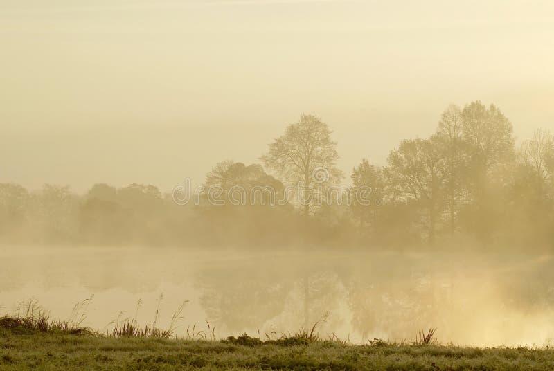 横向有薄雾的日出结构树冬天 库存图片