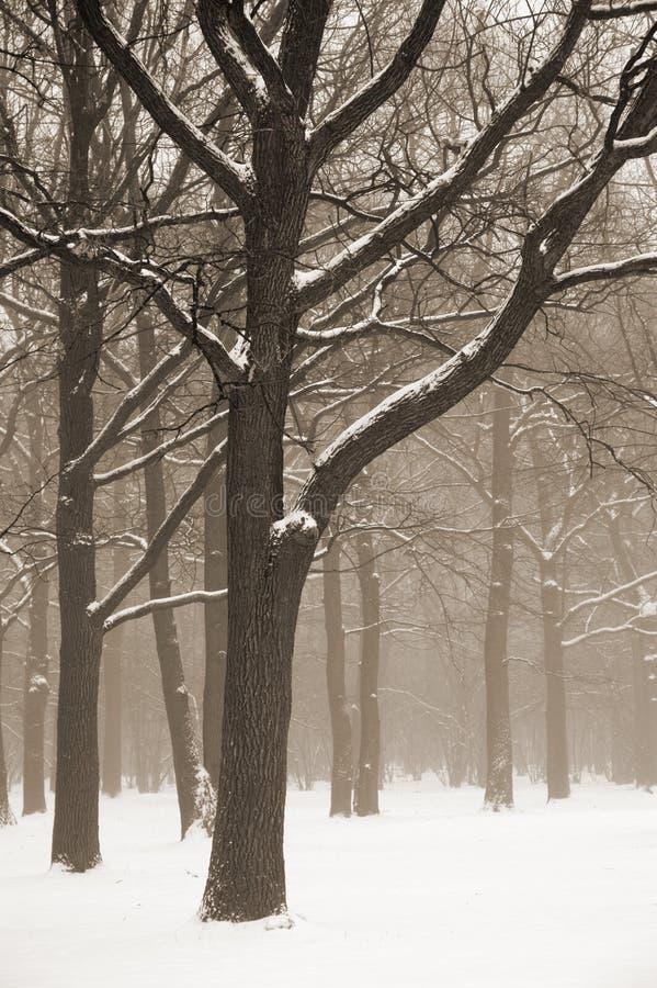 横向有薄雾的结构树冬天 免版税图库摄影